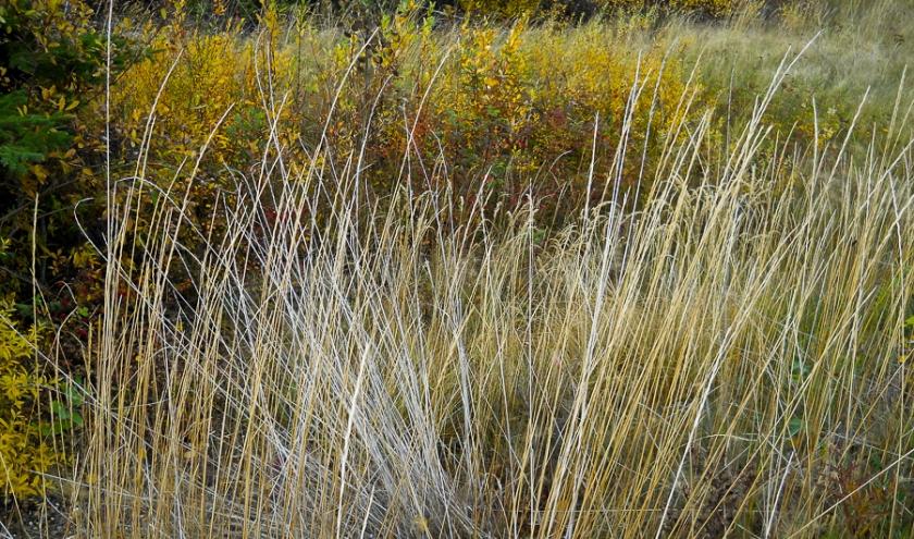 grass-4245