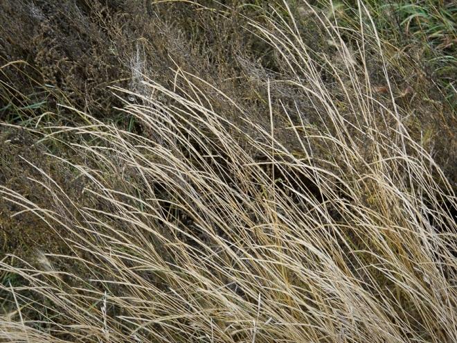 grass-4284