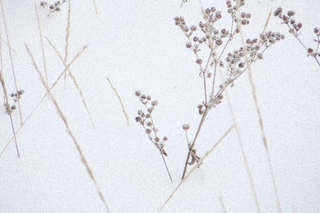 wintergrass-0303