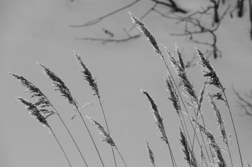grass-0002