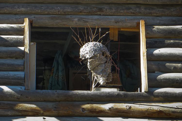 hornets nest-0009