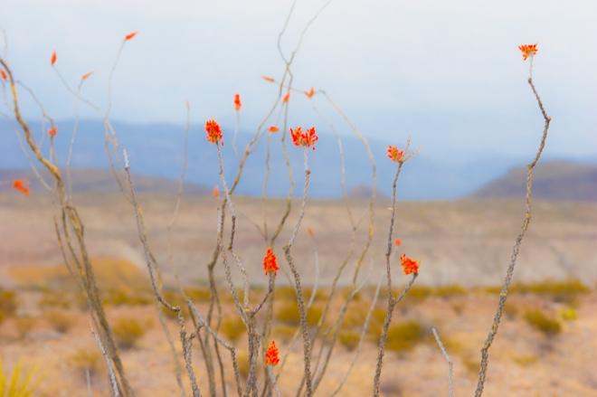 desert life-8258