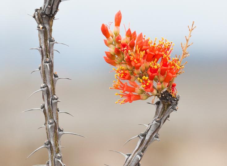 desert life-8261