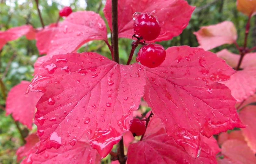 fall foliage-0045