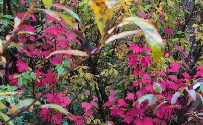fall foliage-0047