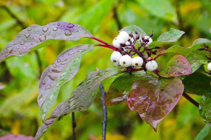 fall foliage-0056
