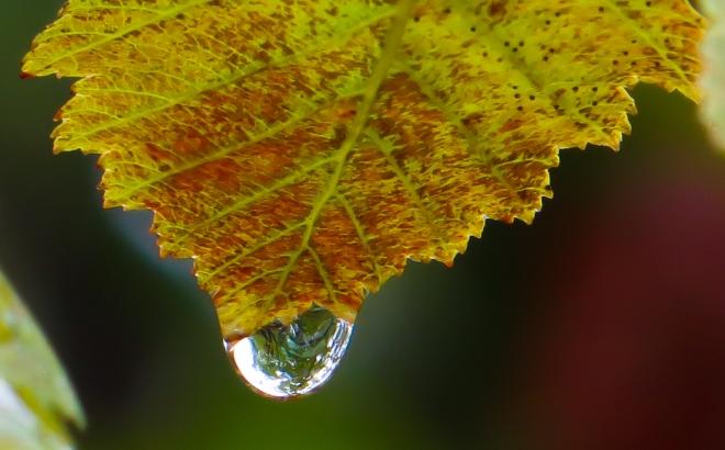 fall foliage-0060