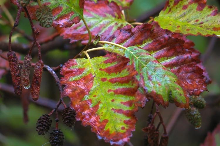fall foliage-0063