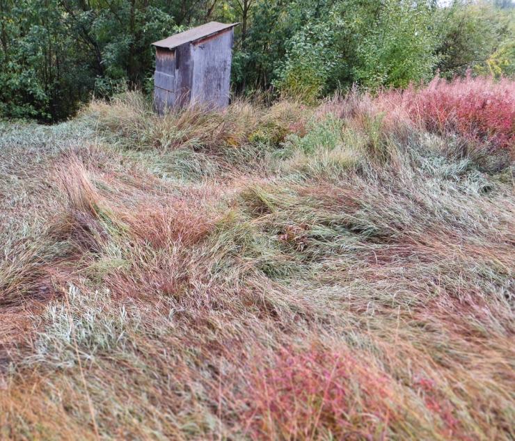 fall foliage-0096