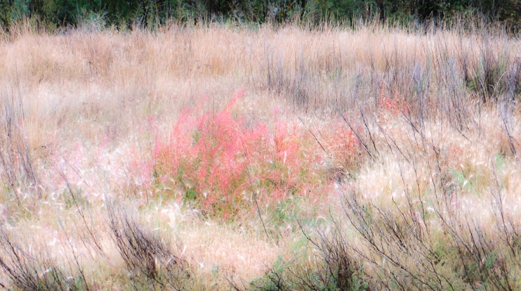 fall foliage-0108