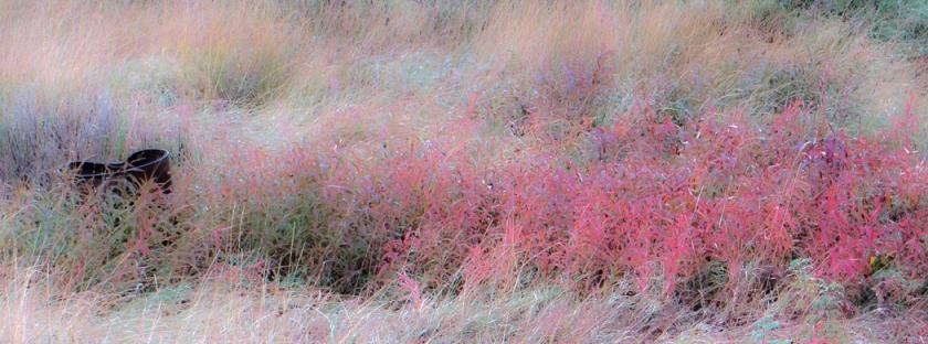 fall foliage-0124