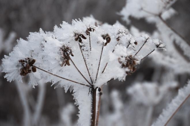 fern frost-1020340