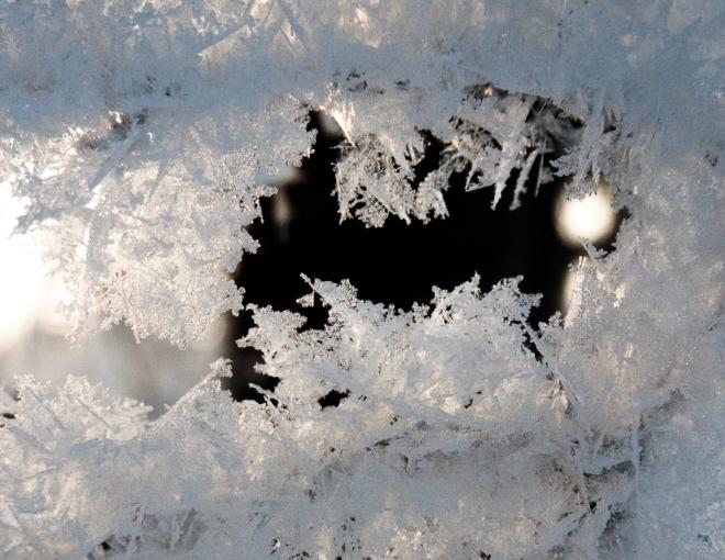 fern frost-1020348