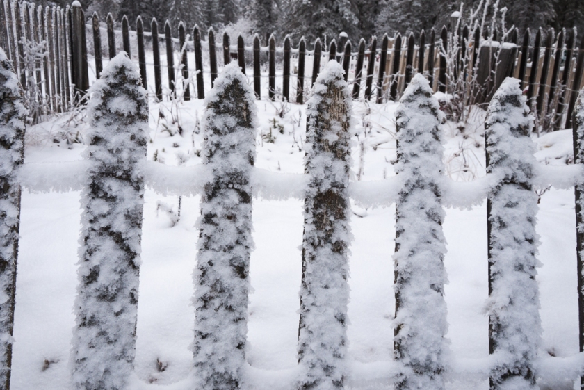 frosted fence-1020356
