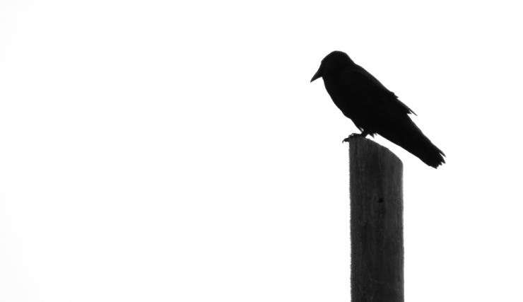 raven-0034