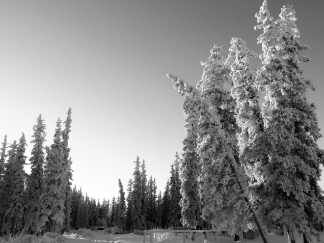 frosted trees-0274