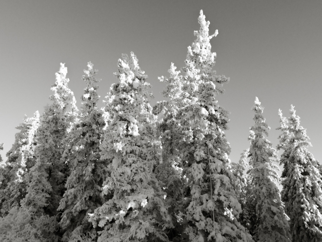 frosted trees-0286