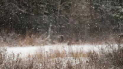 1st-snow-1076