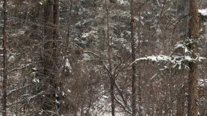 1st-snow-1080