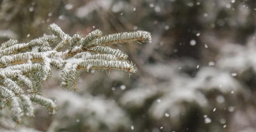 1st-snow-1095