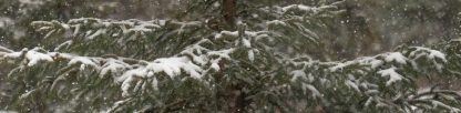 1st-snow-1096