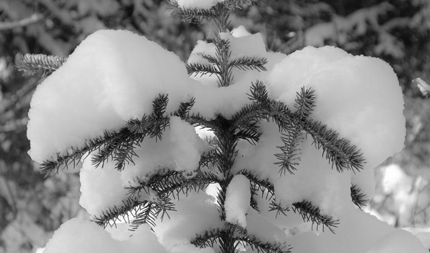 1st-snow-1116