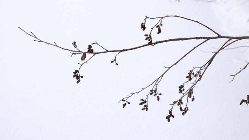 treesntracks-1213