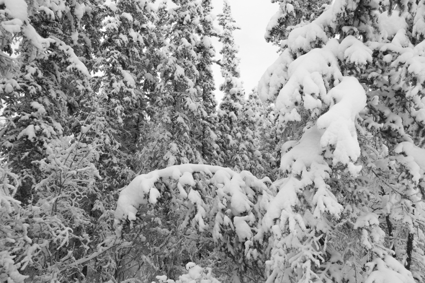 snow-2947