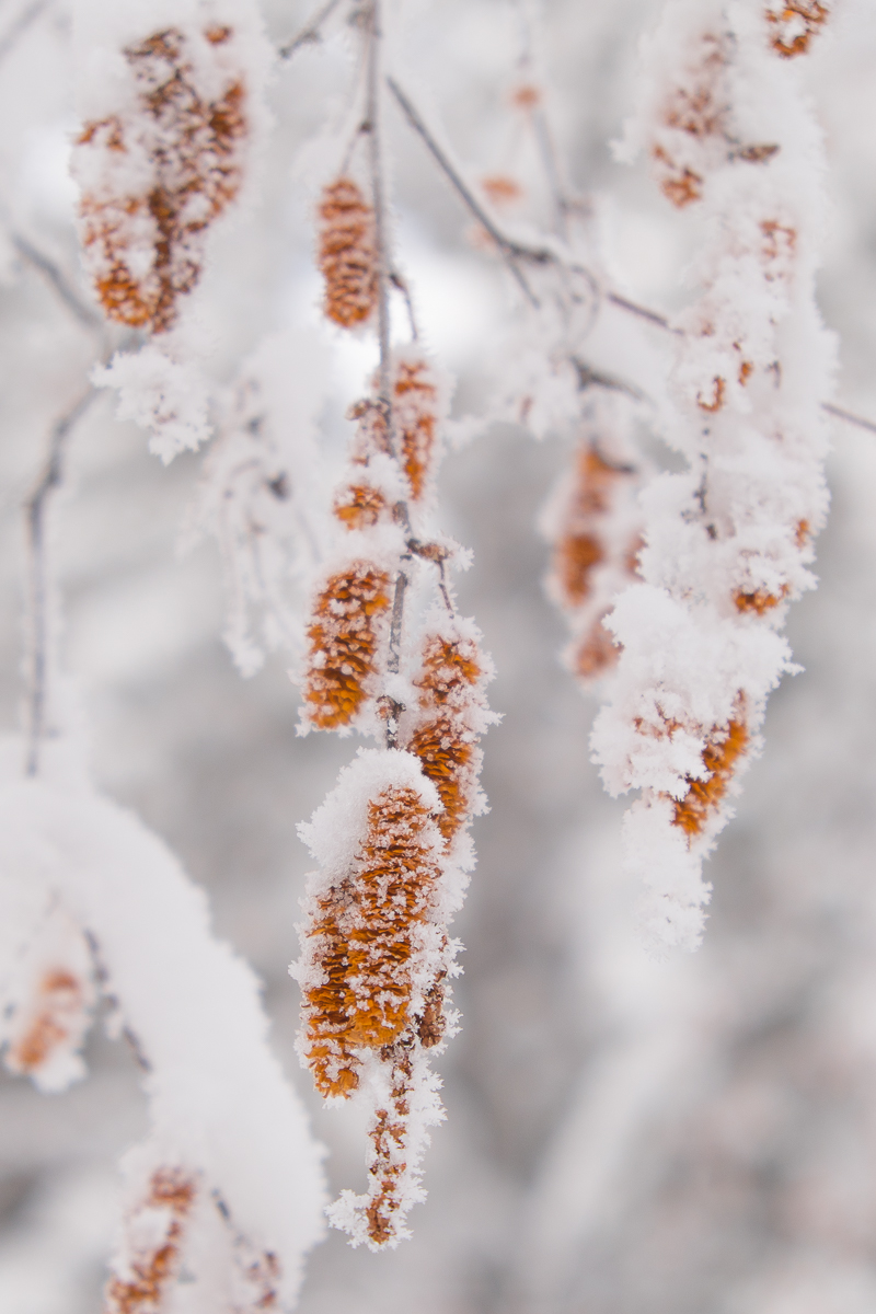 snowx-2954