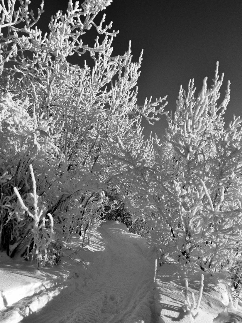 trail-