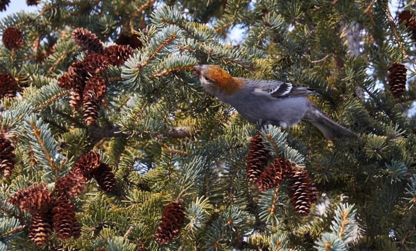 1503_birds-0542